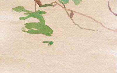 Acuarelas del jardín Botánico. Explicar las obras