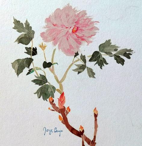 acuarelas-por-encargo-flores